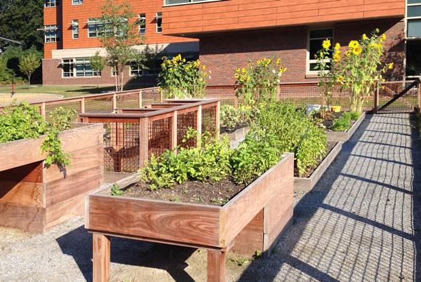 Garden allotment at elementary school in Massachusetts